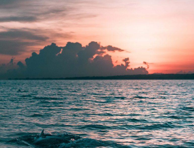 Dolphin_naples florida_naples beach getaway