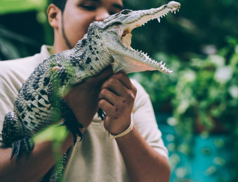 Naples florida zoo