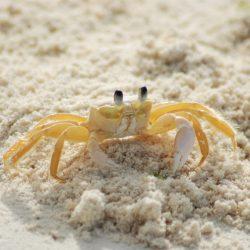 sand crab_naples florida_family friendly activities_naples beach getaway